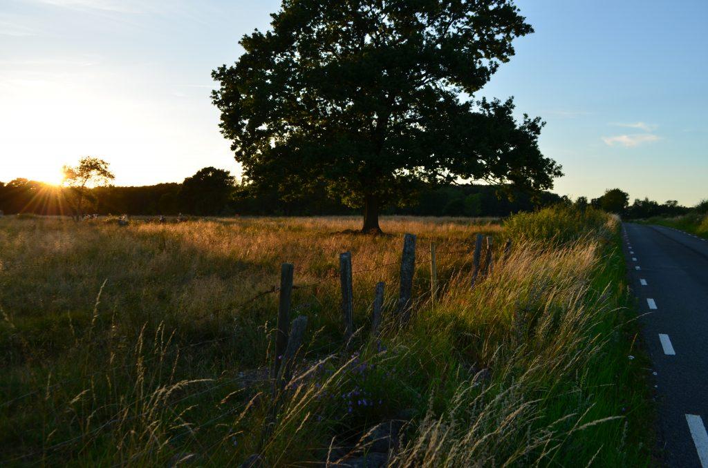 landskap, landskapsplanering, Trädgårdsarkitektur, kunskap